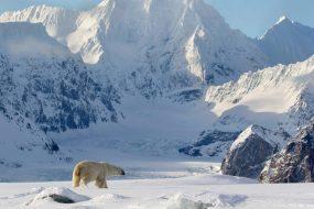 Polarnatt i norr