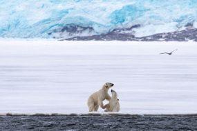 Våren på Svalbard